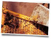 Alvéoles ruche